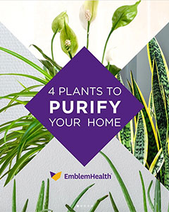 Plants to Purify Your Home